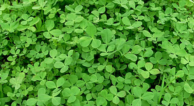 clover-types-2