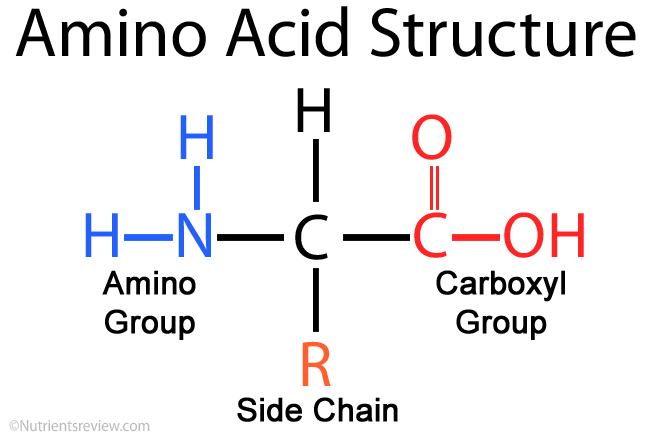 Amino-Acid-Structure